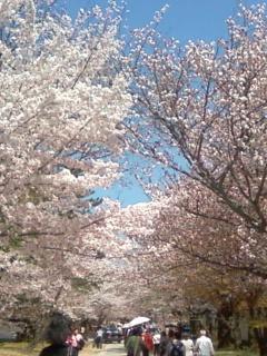 醍醐寺の桜.JPG